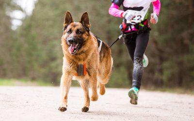 Le Canicross : Pratiquer le sport avec son chien